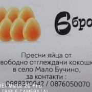 95367943_559546444939173_4137216918199205888_n