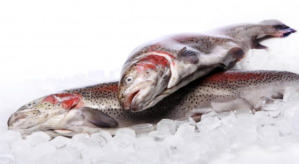 fresh-trout-ice-isolated-white_144627-17402